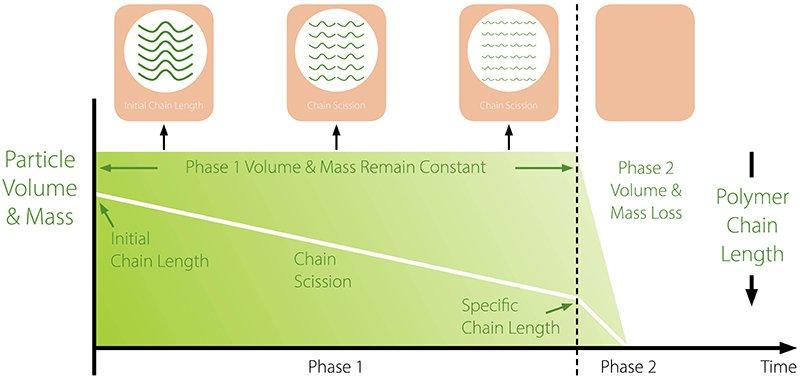 The-bioresorption-process_fig1