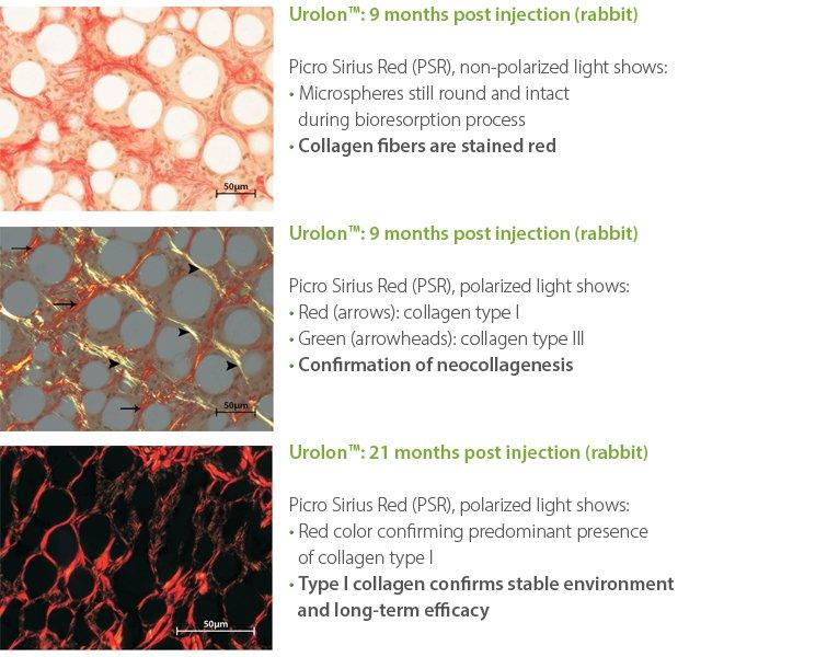 Urolon-Neocollagenesis-Rabbit
